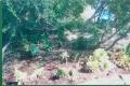 hillside-2